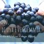 Autunno, odori di uva e vendemmia